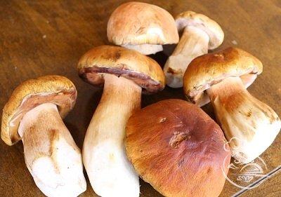 Cушеные грибы